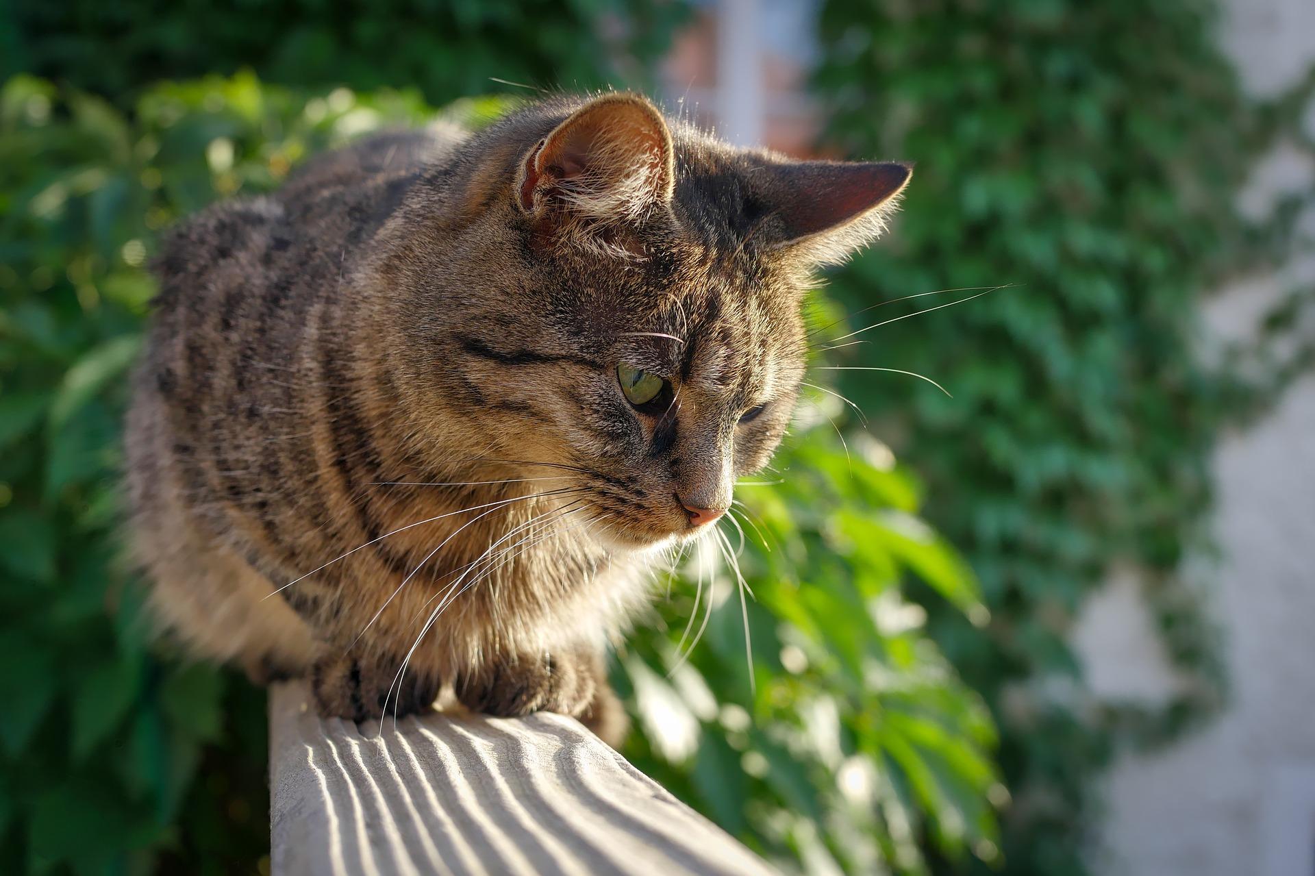 Katze Balkon